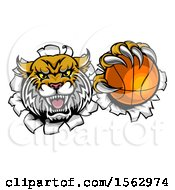 Clipart Of A Vicious Wildcat Mascot Breaking Through A Wall With A Basketball Royalty Free Vector Illustration by AtStockIllustration