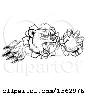 Clipart Of A Black And White Vicious Aggressive Bear Mascot Slashing Through A Wall With A Football In A Paw Royalty Free Vector Illustration