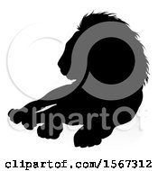 Silhouetted Male Lion With A Reflection Or Shadow