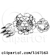 Clipart Of A Black And White Vicious Wildcat Mascot Shredding Through A Wall Royalty Free Vector Illustration by AtStockIllustration