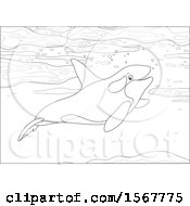 Clipart Of A Lineart Killer Whale Orca Swimming In The Ocean Royalty Free Vector Illustration