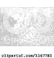 Clipart Of A Lineart Crab In A Conch Shell Royalty Free Vector Illustration