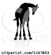 Silhouetted Giraffe With A Reflection Or Shadow