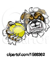 Tough Bulldog Monster Sports Mascot Holding Out A Tennis Ball In One Clawed Paw And Breaking Through A Wall