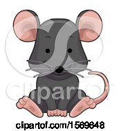 Cute Sitting Rat
