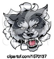 Clipart Of A Gray Wolf Mascot Breaking Through A Wall Royalty Free Vector Illustration