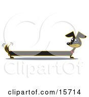 Poster, Art Print Of Very Long Dachshund Dog Looking Back At His Tail