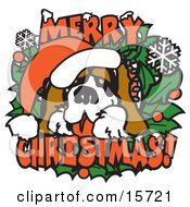 Big St Bernard On A Merry Christmas Sign Clipart Illustration
