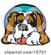 Poster, Art Print Of Friendly Saint Bernard Dog