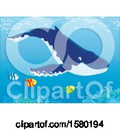 Clipart Of A Humpback Whale Swimming With Fish Over A Reef Royalty Free Vector Illustration