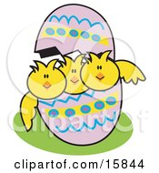 Three Baby Chicks Peeping Out Of A Colorful Easter Egg Clipart Illustration