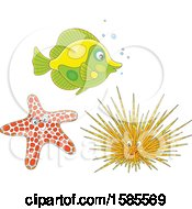 Fish Starfish And Sea Urchin