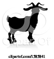 Silhouetted Goat With A Reflection Or Shadow On A White Background