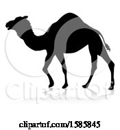 Silhouetted Camel With A Reflection Or Shadow On A White Background