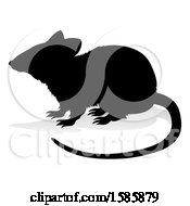 Silhouetted Rat With A Reflection Or Shadow On A White Background