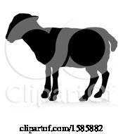 Silhouetted Lamb With A Reflection Or Shadow On A White Background