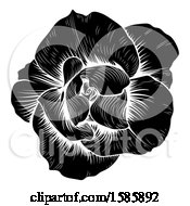 Clipart Of A Black And White Engraved Rose Flower Royalty Free Vector Illustration