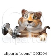 Clipart Of A 3d Tabby Kitty Cat Holding A Dumbbell On A White Background Royalty Free Illustration by Julos