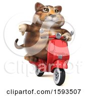 Clipart Of A 3d Tabby Kitty Cat Riding A Scooter On A White Background Royalty Free Illustration by Julos