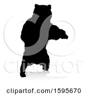Silhouetted Bear With A Reflection Or Shadow On A White Background
