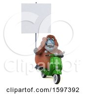 Clipart Of A 3d Orangutan Riding A Scooter On A White Background Royalty Free Illustration