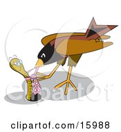 Robin Bird Pecking At An Aggressive Worms Tie