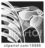 Xray Of A Joint Clipart Illustration