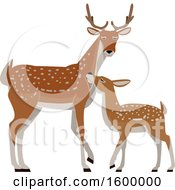 Clipart Of A Buck Deer And Fawn Royalty Free Vector Illustration