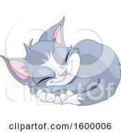 Sleeping Cute Gray And White Kitten