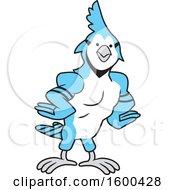 Clipart Of A Muscular Blue Jays Bird School Mascot Royalty Free Vector Illustration