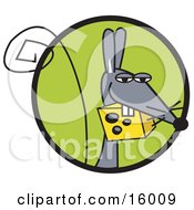 Gray Mouse Carrying Swiss Cheese In His Mouth