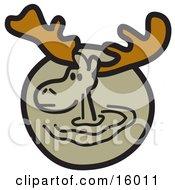 Brown Moose With Big Antlers