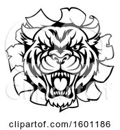 Poster, Art Print Of Black And White Tiger Mascot Head Breaking Through A Wall