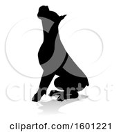 Silhouetted Boxer Dog With A Reflection Or Shadow On A White Background