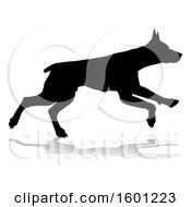 Silhouetted Dobermann Dog With A Reflection Or Shadow On A White Background