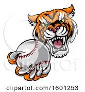 Poster, Art Print Of Vicious Tiger Sports Mascot Grabbing A Baseball