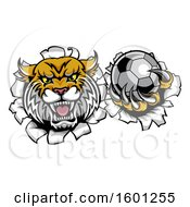 Clipart Of A Vicious Wildcat Mascot Breaking Through A Wall With A Soccer Ball Royalty Free Vector Illustration by AtStockIllustration
