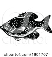 Crappie Fish Mascot In Black And White Woodcut