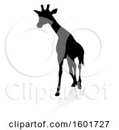 Silhouetted Giraffe With A Reflection Or Shadow On A White Background