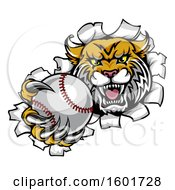 Clipart Of A Vicious Wildcat Mascot Breaking Through A Wall With A Baseball Royalty Free Vector Illustration by AtStockIllustration