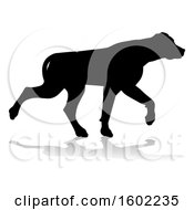 Silhouetted Labrador Dog With A Reflection Or Shadow On A White Background