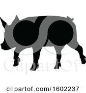 Black Silhouetted Pig