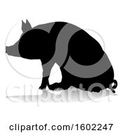 Silhouetted Pig With A Reflection Or Shadow On A White Background