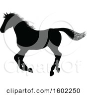 Black Silhouetted Horse