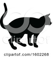 Black Silhouetted Cat