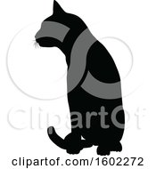 Black Silhouetted Cat Sitting