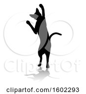 Silhouetted Cat With A Shadow Or Reflection On A White Background