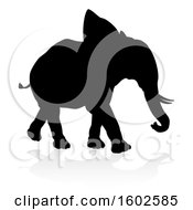 Silhouetted Elephant With A Reflection On A White Background