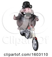 Clipart Of A 3d Hippo Biker Riding A Chopper Motorcycle On A White Background Royalty Free Illustration