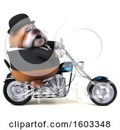 Clipart Of A 3d Gentleman Or Business Bulldog Biker Riding A Chopper Motorcycle On A White Background Royalty Free Illustration by Julos